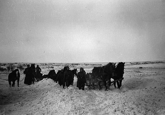 Wehrmacht Heer Armeepferde Pferdegespanne - Versorgung / Transport - Ostfront
