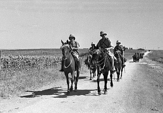 British Army Armeepferde / Army Horses - Völkerbundsmandat für Palästina / Palestine under the British Mandate / Mandatory Palestine