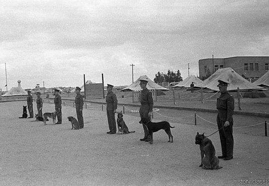Völkerbundsmandat für Palästina - Palestine under the British Mandate / Mandatory Palestine - Training mit Schutzhund