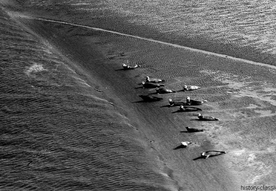 Momentaufnahme Insel Memmert / Snapshop Memmert Island - Schutzgebiet für Seehunde / Sanctuary for Seals - 1958